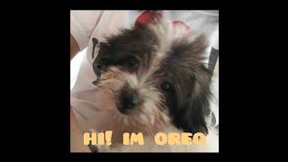 meet my fur baby | oreo my little baby girl