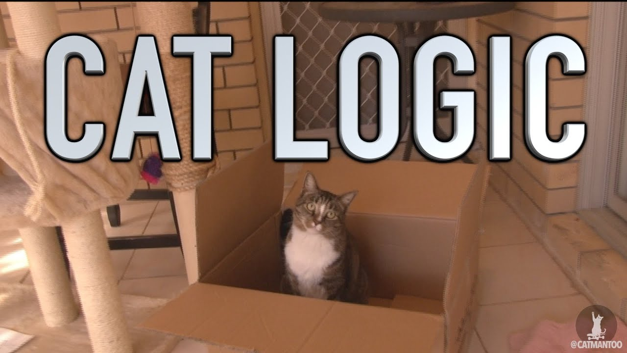 Cat Logic Youtube