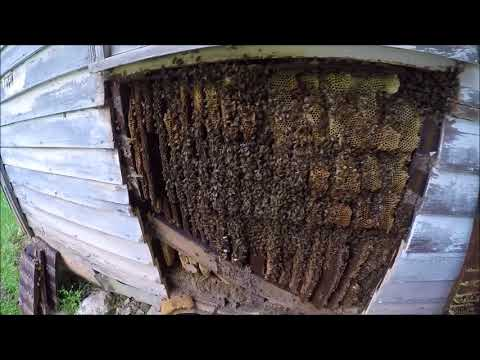 Beekeeping - The Old Farmhouse Cutout 2017