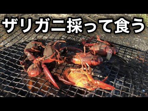 ザリガニ 調理