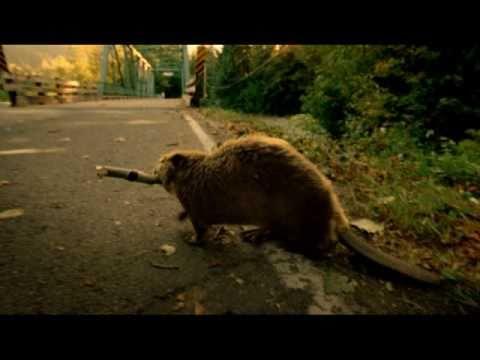 """Superbowl 2011 Bridgestone Commercial: """"Carma"""""""
