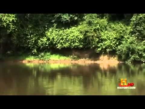 Evidence of the Mokèlé Mbèmbé Dinosaur english Documentary part 2