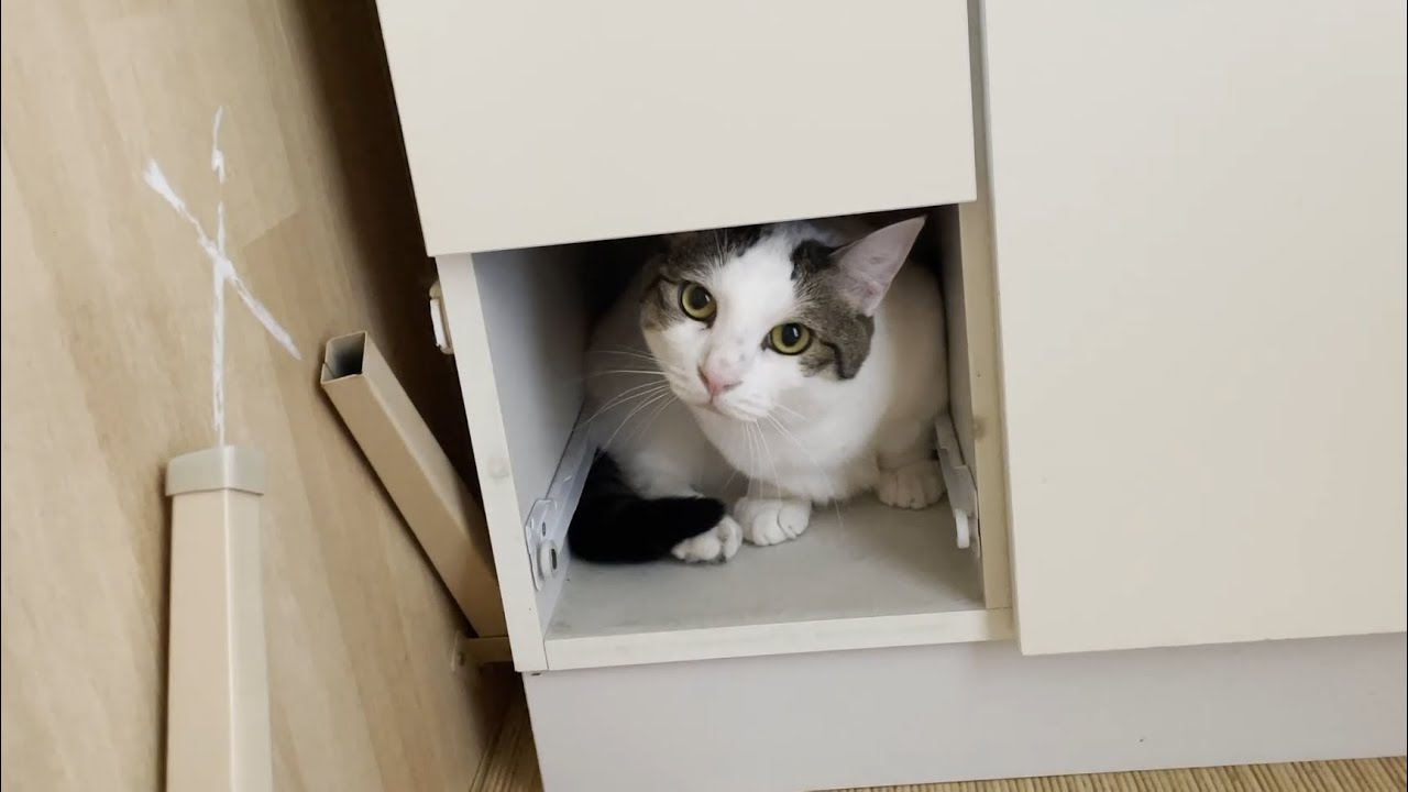 引き出しを開けられない猫が、なぜ?