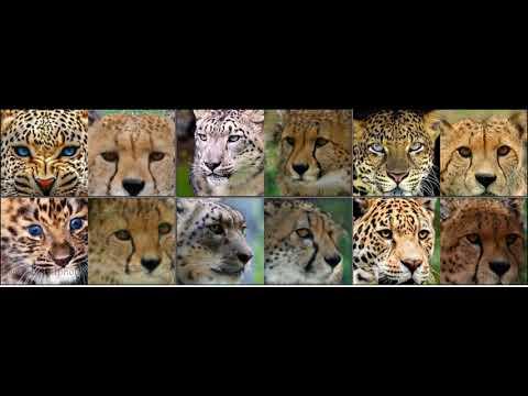 Unsupervised Cat Species Image Translation
