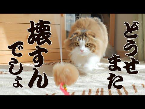 毎月猫じゃらしを破壊するもふ猫に今月の猫じゃらしは釣りタイプだよ