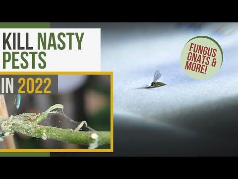 Indoor Plant Pests 101