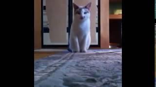 Bana Para Ver Diyen Kedi !!! :D