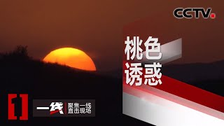 《一线》 桃色诱惑 20200504 | CCTV社会与法