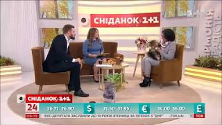 Siberian cat Vieter Zaimka on TV studio 1+1