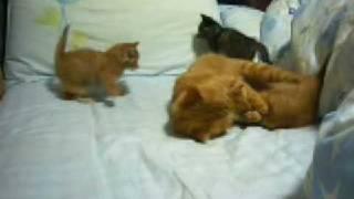 母猫によるケンカのしつけ?ちょっとコワイです。苦笑.