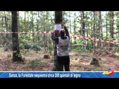 Sanza, la Forestale sequestra circa 200 quintali di legna