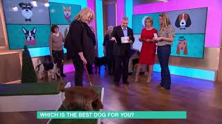 Which is the Best Dog for You?  Cocker Spaniel   This Morning