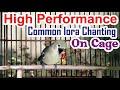 Pancingan Suara Burung Sirtu Cipoh Terdahsyat Bikin Musuh Kalang Kabut  Mp3 - Mp4 Download