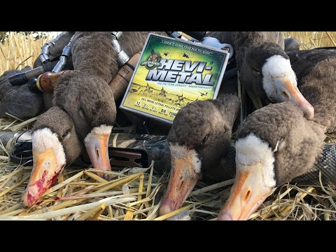 INSANE GOOSE LIMITS ... Claudio Ongaro's Hired To Hunt Season 5: Limits Of Ducks & Geese At Ongaro's