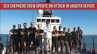 SEA SHEPHERD Crew Update on Attack in Vaquita Refuge