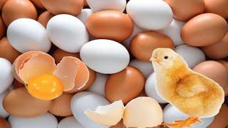 شاهد ماذا يحدث لك ان لم تتناول البيض؟