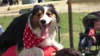 2018 Nagasaki Bio Park シープドッグショー ~牧羊犬のお仕事を見てみ...