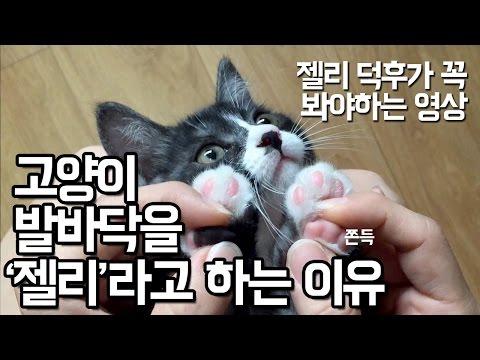 [아기고양이] 고양이 발바닥을 '젤리'라고 하는 이유 猫の肉球を触れてみよう