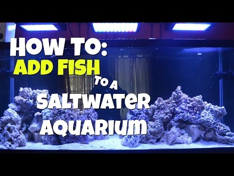 How To: Add Fish To A Saltwater Aquarium