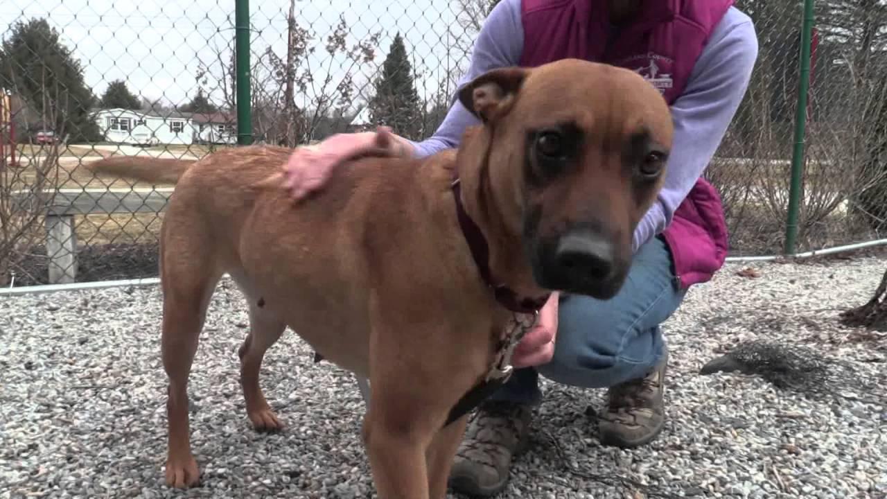 Rutland County Humane Society Saves Southern Dogs Youtube