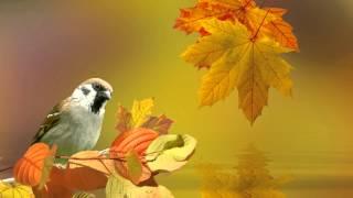 Золотая осень!!! Бесплатный футаж.