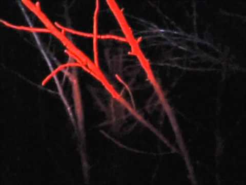 MAGICAL FIVEWORDSLONG MUSIC VIDEO/HUMAN HARVEST PROMO HYBRID!