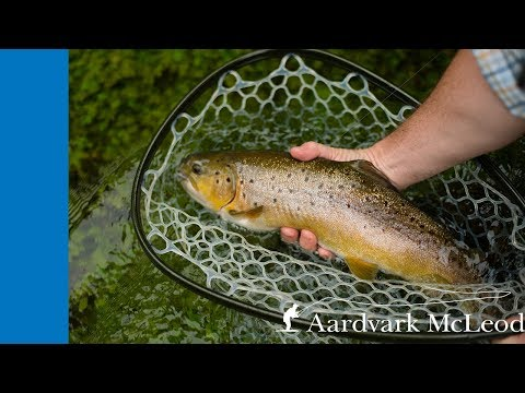Fly Fishing The River Anton Chalkstream