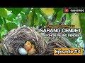 Episode  Diluar Dugaan Dapat Sarang Cendet Di Pohon Risidi Dekat Rumah  Mp3 - Mp4 Download