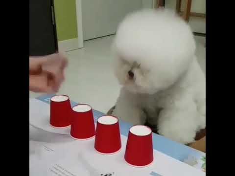 Smart dog ever