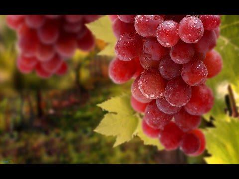 مزيج العنب الأحمر والبرتقال يعالج السمنة والسكري