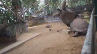 Лучшие новые приколы за ноябрь 2013 подборка - Секс гигантских черепах! Верблюд пьет пиво!