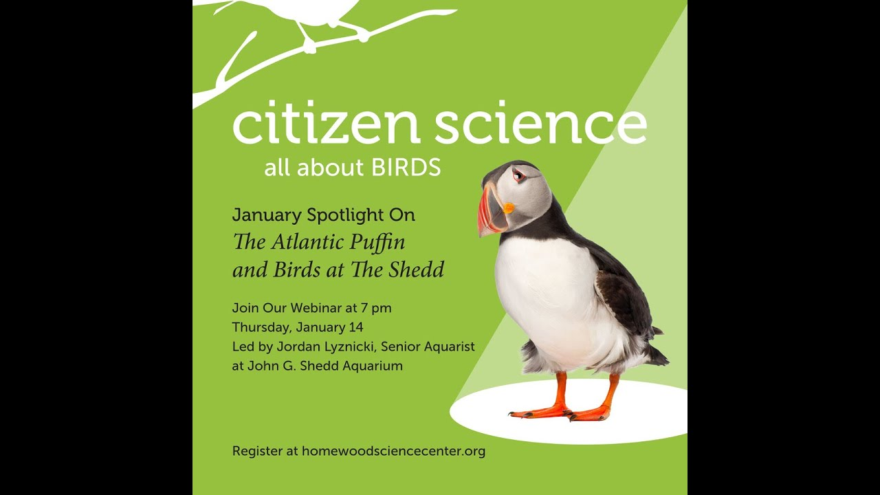 Citizen Science: All About Birds