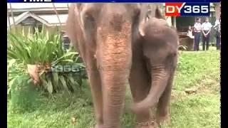 মাধৱী আৰু পুলপুলিৰ বাবে দেওবাৰটো বিশেষ দিন || World elephant day || Madhabi and Pulpuli at Zoo
