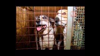 Единый центр по отлову бездомных животных / Новости