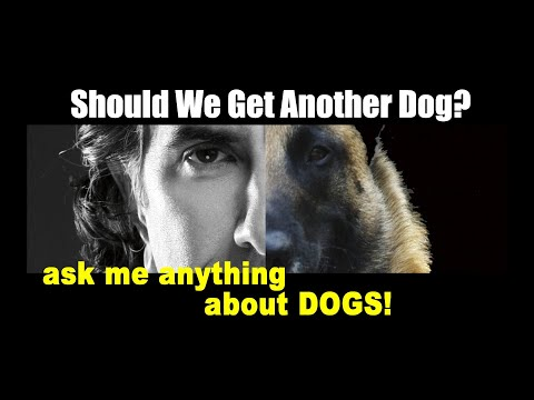 Should We Get Another Dog ? - ask me anything - Dog Training Video Advice