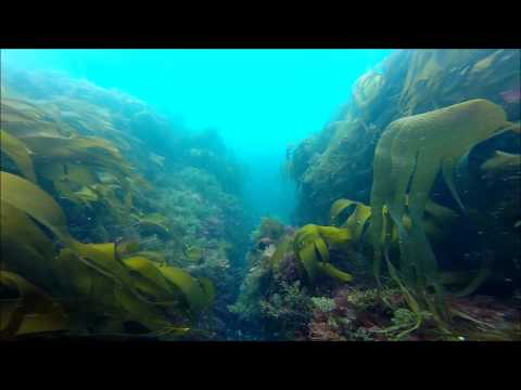 Our Scuba Trips | diving with scuba dive academy, lahinch