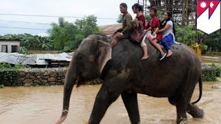 Elephant rescue  600 tourists stranded in Nepal get rescued by elephants   TomoNews