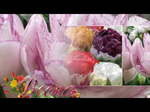 Цветы обои , фото, картинки на рабочий стол