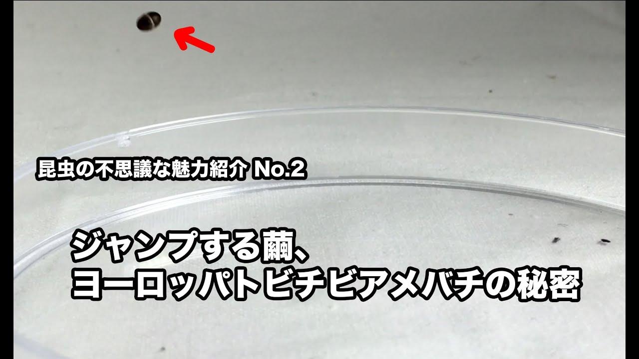 昆虫の不思議な魅力紹介No.2〜ジ...