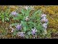 Skin Health Benefits of Astragalus - Health Benefits of Astragalus