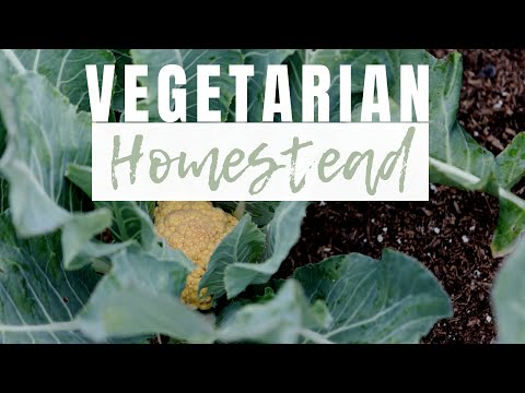 Can you Homestead as a Vegetarian or Vegan? | Our Plant Based Lifestyle