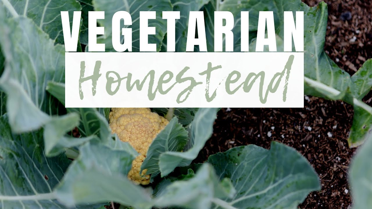 can you homestead as a vegetarian or vegan? plant basedcan you homestead as a vegetarian or vegan? plant based homesteading \u2013 sunshine farm
