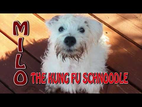 Milo, The Kung Fu Schnoodle