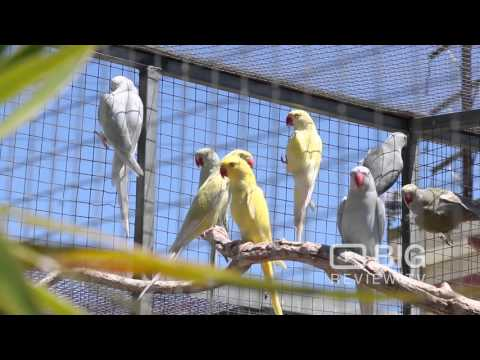 The Bird Place a Pet Shop in Adelaide selling Parrot, Cockatiel or Love Birds