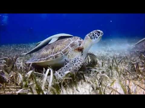 Belize Marine Life Previews