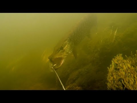 MUST SEE: Filming Pike Attacking Fishing Lure & CATCHING FISH With RC BAIT BOAT..