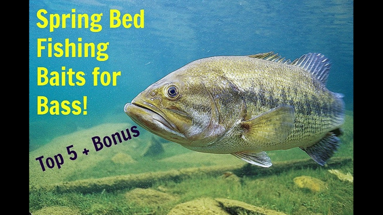 spring bed fishing baits for bass.. my top 5 + bonus - youtube, Hard Baits