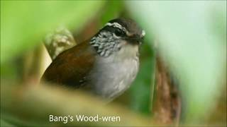 Birds of Santa Marta Mountains and Northern Colombia