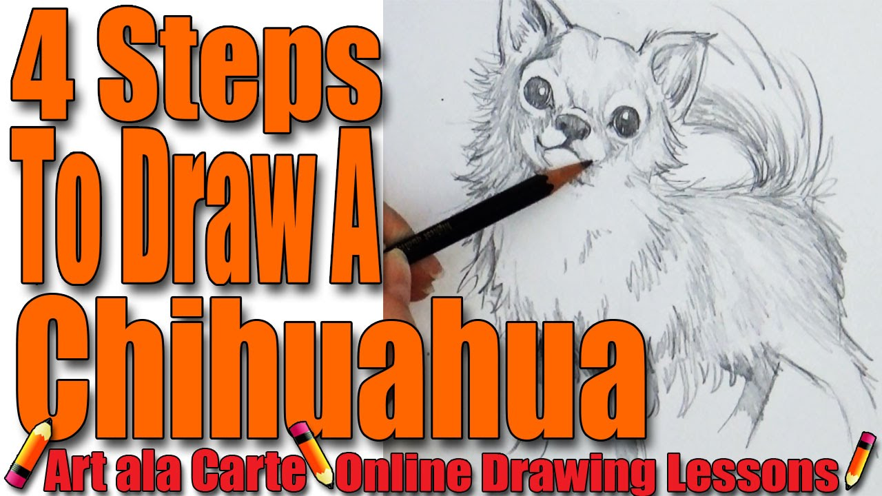 draw a chihuahua in 4 steps youtube