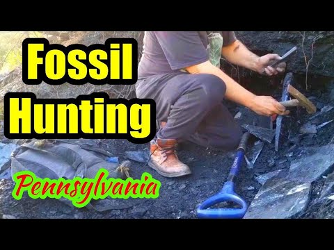 Fossil Hunting In Pennsylvania, U.S.A.